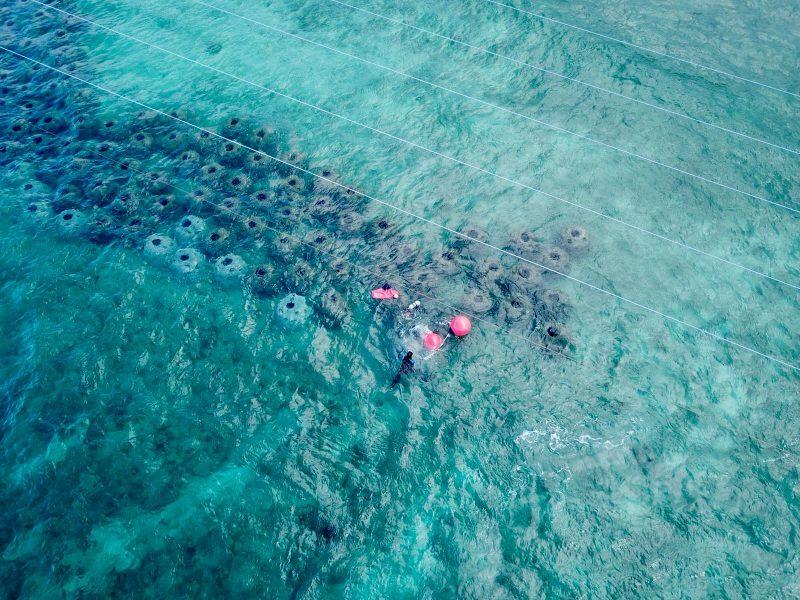 Reef work in Labadee, Haiti
